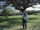 Виминацијум 2011_1